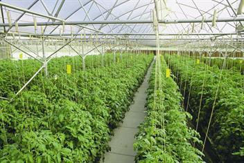 Uae Sows The Seeds Of Sustainability Emirates 24 7