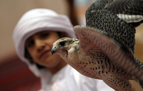 A young boy looks at a falcon on display on the first day of the Abu Dhabi International Hunting and Equestrian exhibtion (ADIHEX). (AFP)