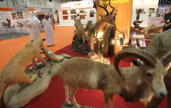 Emiratis look at a display of wild life on the first day of the Abu Dhabi International Hunting and Equestrian exhibtion (ADIHEX). (AFP)