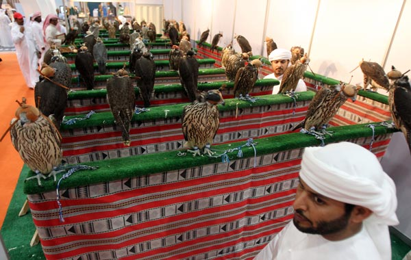 Falcons are displayed the first day of on the Abu Dhabi International Hunting and Equestrian exhibtion (ADIHEX). (AFP)