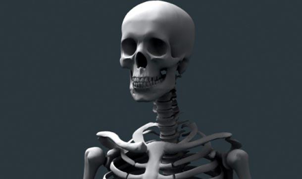 couple buy real human skeleton at yard sale - emirates 24|7, Skeleton