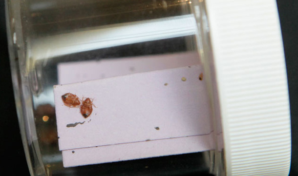 Lawsuit charges waldorf had bedbugs emirates 24 7 for Bed bug litigation