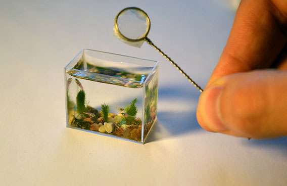 Home Water Filter >> World's smallest aquarium with the tiniest of fish - Emirates24 7