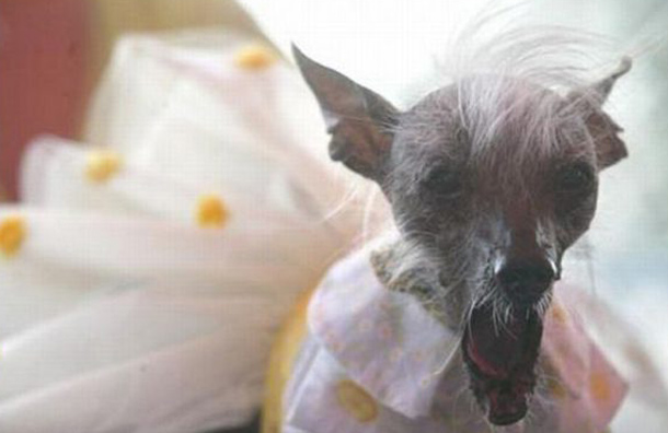 At least you can look the side of this and laugh at the appearance of these ugly dogs (ugliest than I have ever dreamed of anyway). (AGENCY)