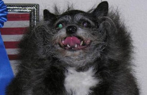 Watching images of these ugly pets is bound to give you nightmares (so please, proceed with caution through this image gallery). Have fun (if you can), and good luck to you. (AGENCY)