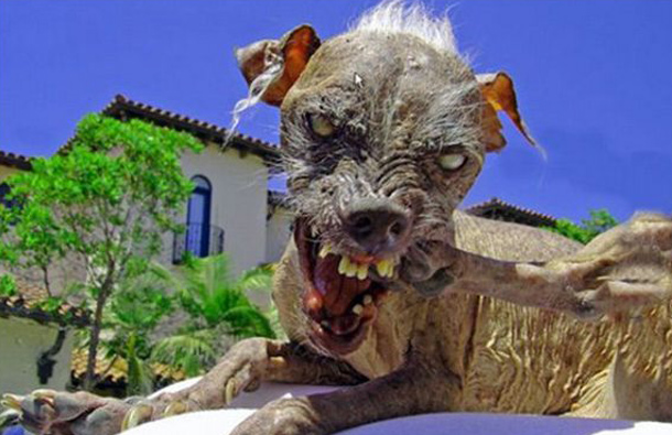 This is not a kind the way you would like your dog to look like, because winning this contest means that your dog has failed badly. (AGENCY)