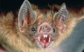 Photo: Man bitten by rabid bat hiding between iPad and case