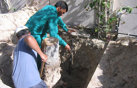 The Parks and Horticulture Department of Dubai Municipality digging up a Damas tree. (SUPPLIED)