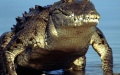 Photo: Philippine boy eaten by croc in latest attack