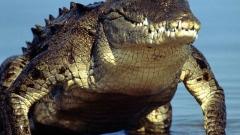 Photo: Philippine boy eaten by croc in latest attack