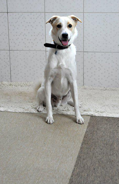 This dog has been in the shelter for over 3 years. (SUPPLIED)
