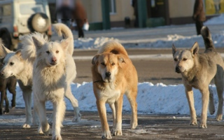 Photo: Humane Society: 47 dogs taken from home, 10 more found dead