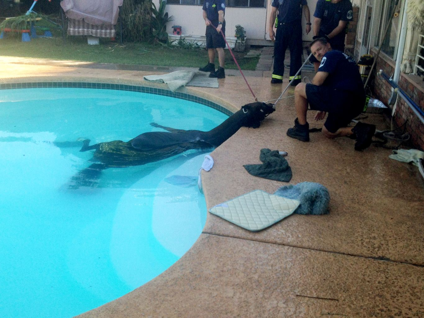 Horse rescued from pool at home - Emirates24|7