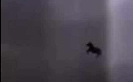 'Flying' horse seen in Makkah - Emirates 24|7