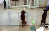 Photo: Puppy breaks into Latin dance on spotting his owner
