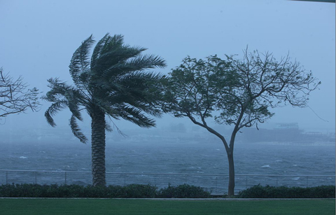 The storm spikes up a blowy landscape in Abu Dhabi. (Ashok Verma)