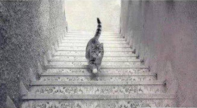 Is this cat going up or down. (Pic credit: Imugr)