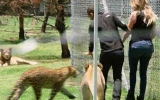 Photo: Lions don't like the Kardashians? Khloe finds out