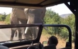 Photo: Arnold Schwarzenegger chased by wild elephant