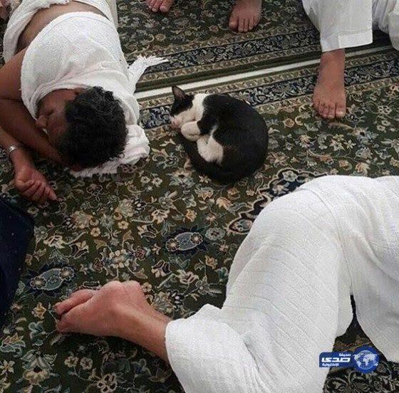 Мир и покой для всех в Великой Мечети Аль-Харам