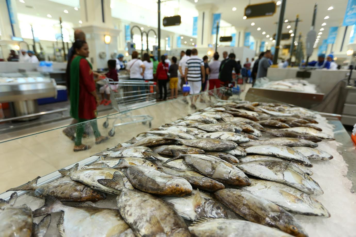 Souq Al Jubail sells an incredible 1 5m kg of fish in the