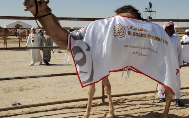 Winners of camel beauty contest at Dhafra Festival crowned