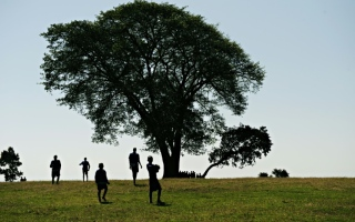 Photo: Woman 'marries' tree as protest