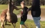 Photo: Little boy shocked when a kangaroo punches him in the face