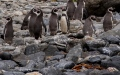 Photo: Huge penguin remains found in New Zealand