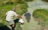 Photo: Terrifying moment monster crocodile bursts out of murky water
