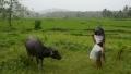 الصورة: Fearless Philippine farmers defy volcano anger