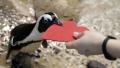 الصورة: Love on the rocks: Penguins celebrating Valentine's Day