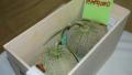 الصورة: Pair of Japanese premium melons sell for record $29,300