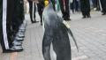 الصورة: Penguin practices football skills for World Cup