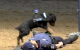 Photo: Police dog in Spain appears to perform CPR on partner