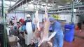 Photo: Abu Dhabi slaughterhouses all set for Eid Al Adha