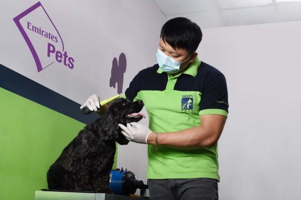 الصورة: Emirates SkyCargo launches Emirates Pets