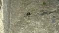 Photo: Deadly black widow found in Scotland