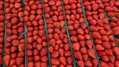 الصورة: Australia offers reward amid mystery strawberry needle scare