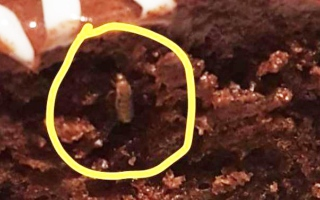 الصورة: Bug in cake gives Ikea India fresh embarrassment