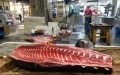 Photo: World's largest fish market reopens at new site in Tokyo