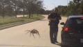 Photo: Police dash cam shows gigantic spider