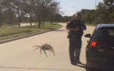 Photo: Police dash cam shows gigantic spider