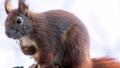 Photo: Man dies from rare brain disease after eating squirrel brains