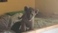 Photo: Police seize lion cub from Paris apartment
