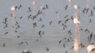 Photo: EAD to help establish dedicated web portal for Waterbird Population Estimates