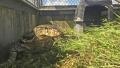 Photo: Officers catch huge lizard that terrified Florida neighbors
