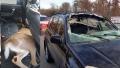 Photo: Crash sends deer into back of woman's SUV