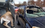 Photo: Crash sends deer into back of woman's SUV