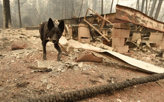 Photo: Death toll from California wildfires rises as 130 still missing
